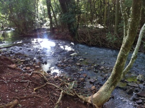 Clareira às margens do Rio Cedro - Missal